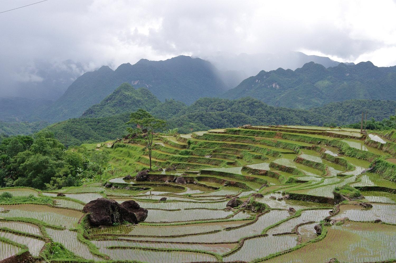 Rizieres en terrassee autour du village Don, Pu Luong