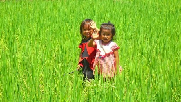 Les enfants laotiens dans les rizières